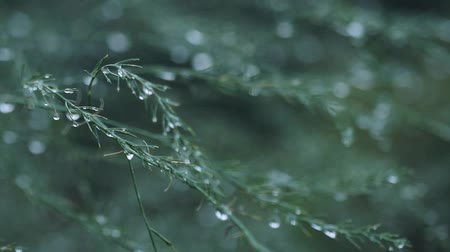 sutil : Plant in with natures rain bokeh background of blurry drops and defocused round particles Vídeos