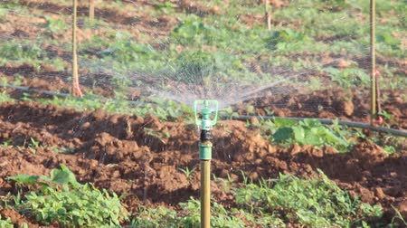 Crop irrigation by using water sprinkler system on farmland