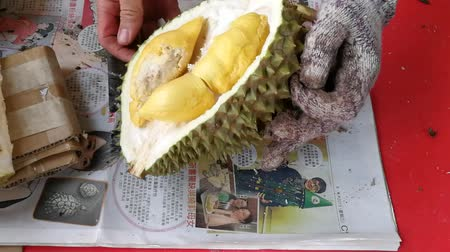 mal cheiroso : Person opening the Musang King variety durian fruit