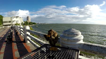 Monkey eating fruit on a bridge by the sea.