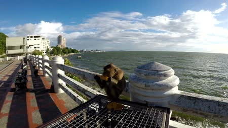 sea monkeys : Monkey eating mango on a bridge by the sea.