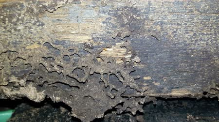 carpintaria : Many termites eat the wood of the house. Stock Footage