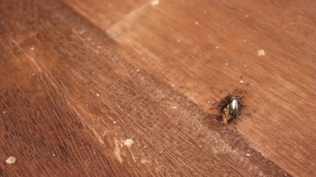 Ants are bringing dead insects back to the nest to eat.