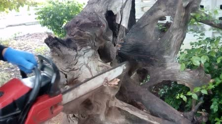 The carpenter is using saws to cut logs. Stok Video
