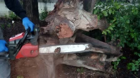 piŁa : The carpenter is using saws to cut logs. Wideo