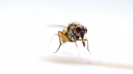 bot : A macro shot of a fly as it feeds
