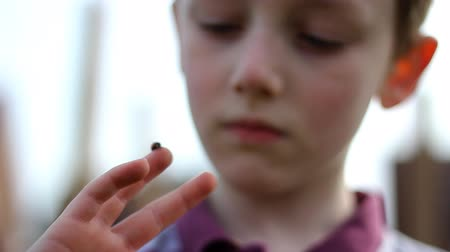 A child plays with a ladybird
