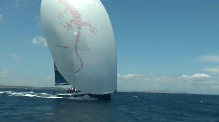 barco : Sailing boat navigating fast with open sails during regatta