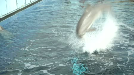 yunus : Dolphin jumping high in aquarium