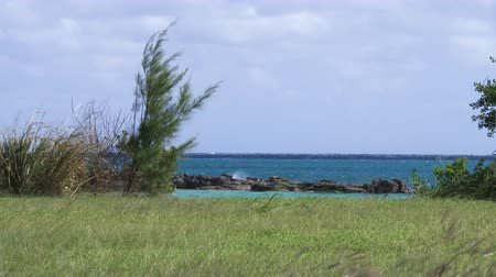 bermudas : Panoramic view of grass field with view of the ocean on a windy day in Bermuda Vídeos