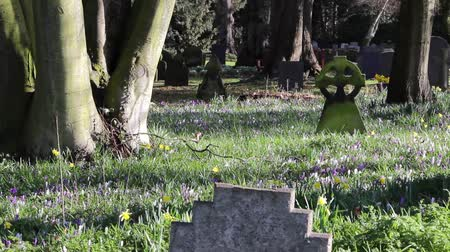 могила : Picturesque Church Yard in Morning Light - Squirrels, beautiful flowers & Grave stones - Tree Shadows Rural Setting - English Countryside Nature Walks Backgrounds