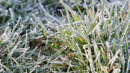 don : Close Up Grass Showing Morning Dew  Frost & Gentle Breeze  Wind - Nature Beautiful Light - English Nature Details Countryside Walks - Wild Life Backgrounds