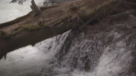 Орегон : Footage of a log sitting over falling water at Benham Falls near Bend, OR.