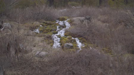 Орегон : Footage of a mountain stream surrounded by brush filmed near Bend, OR.