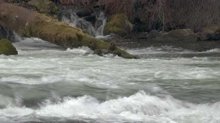 Footage of a fallen tree bobbing in a river above Benham Falls outside Bend, OR.