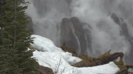 Footage of Tumalo Falls with pine trees taken during the winter with snow. Dostupné videozáznamy