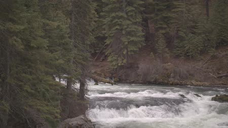 Footage of Benham Falls outside of Bend, OR. Stock mozgókép