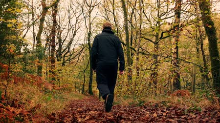 fall down : Man walking down trail on a carpet of fallen leaves in fall with slight slow motion Stock Footage