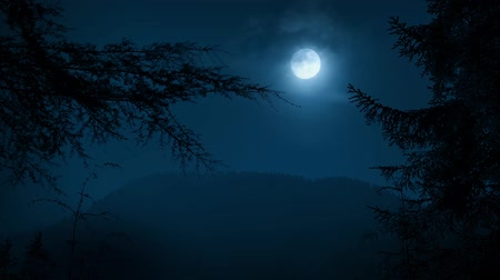 night : Trees Framing Night Forest With Moon Stock Footage