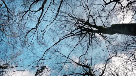 subir : Tracking shot looking up at sky and trees in forest