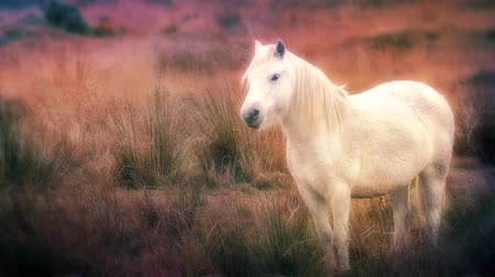 hallucinating : Glowing white horse in fantasy world Stock Footage