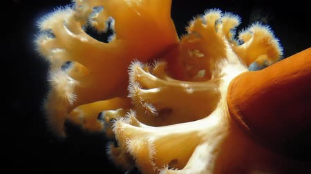 garip : Large Orange Anemone Deep In The Ocean