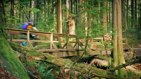 mosty : Cyclists Ride Over Wooden Bridge In Forest