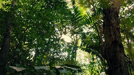 floresta tropical : Gliding Under Jungle Trees With Flickering Sun Vídeos