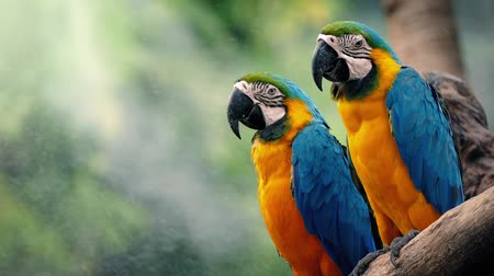 ara papagáj : Macaw Parrots On Branch In Tropical Landscape Stock mozgókép