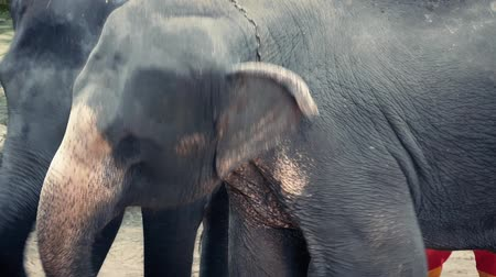 elefanten : Elephants Forced To Animal Cruelty Tanz