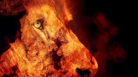 řev : Powerful Lion Face In Fire Abstract