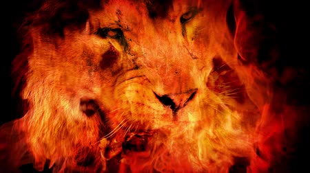 řev : Ferocious Lion Eats Meat In Fire Abstract