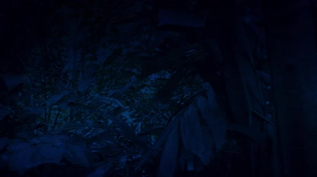 forest animals : Moving Through Dense Jungle At Night Side View