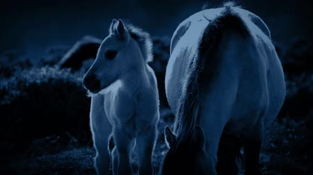 night scene : Foal And Mother Grazing At Night Stock Footage