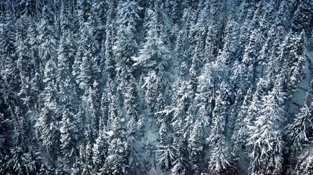 snows : Flight Past Forest In Snowfall