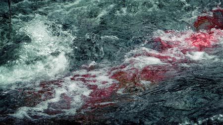 seeping : Blood In River Rapids