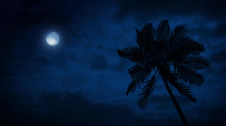 mehtap : Palm Tree In Breeze With Moon Above