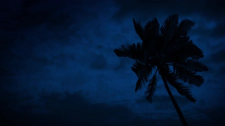 mehtap : Palm Tree On Windy Night Stok Video