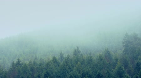 дымный : Mist Passing Over Mountainside Trees Стоковые видеозаписи