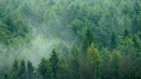 дымный : Mist Rising Slowly In The Forest