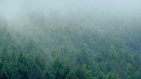 дымный : Misty Mountain Forest In Wind