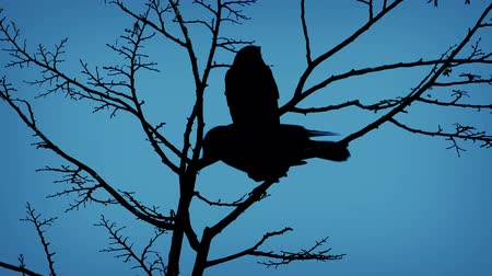 ptak : Birds On Branch And Flying Off In Evening Wideo