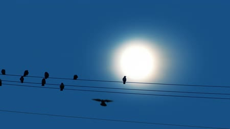 ptak : Bird Lands On Wire In Front Of Sun