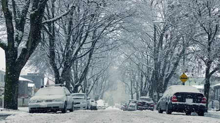 snows : Cars And Houses In Heavy Snowfall