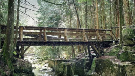 snows : Bridge Over Forest River In Snowfall