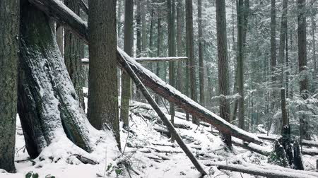 snows : Passing Fallen Logs In Snowy Winter Forest