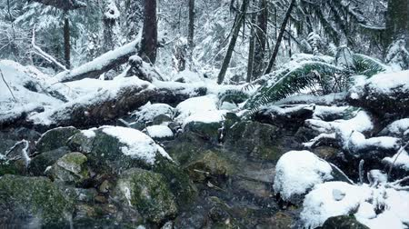 snows : Moving Past River In Snowy Forest Stock Footage