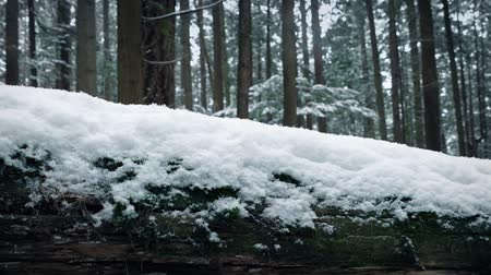 snows : Passing Snow Covered Log In Forest Stock Footage