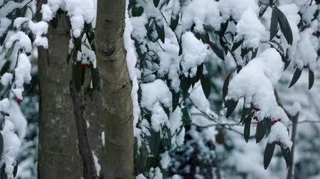 snows : Trees With Berries In Snowfall