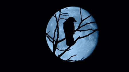 corvo : Birds Fly Off Branches In Front Of Full Moon Vídeos